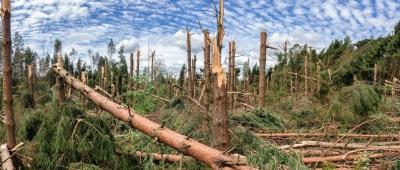 Последствия урагана (13 июля 2016) Столбцовский район